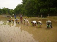 赤米の田植え体験