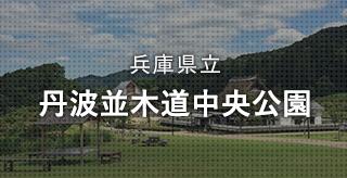 兵庫県立 丹波並木道中央公園